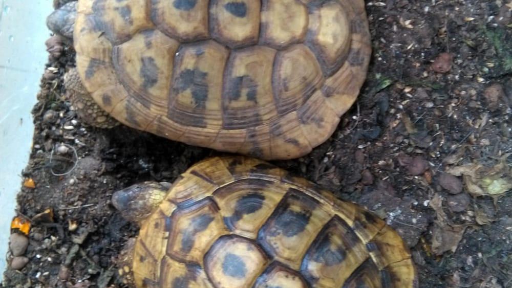 tartarughe-3