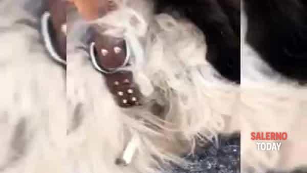 Ecco il video del cane impiccato ad Eboli