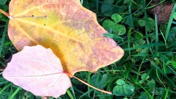 Colori d'autunno: foto naturalistiche all'Oasi del fiume Alento, domenica 8 ottobre