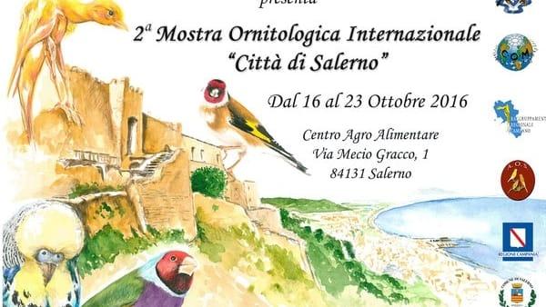 """Salerno prende il """"volo"""": mostra Ornitologica Internazionale dal 21 al 23 ottobre"""