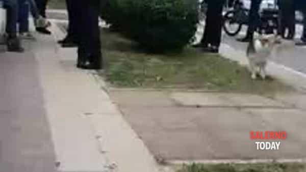 Donna senza mascherina oltraggia la Municipale sul Lungomare: il video