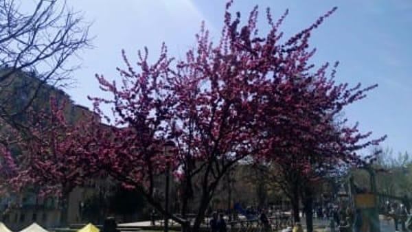 albero1-5