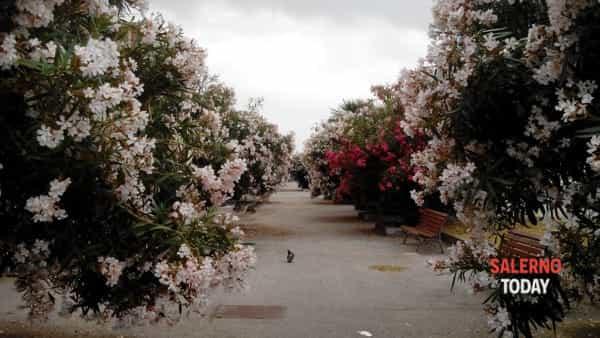 giardini_mercatello_foto_1-3