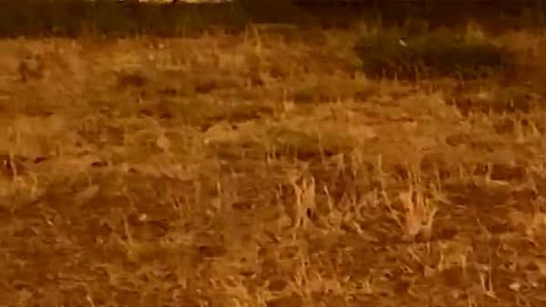 Topi a spasso nei giardini di Piazza San Francesco: il video